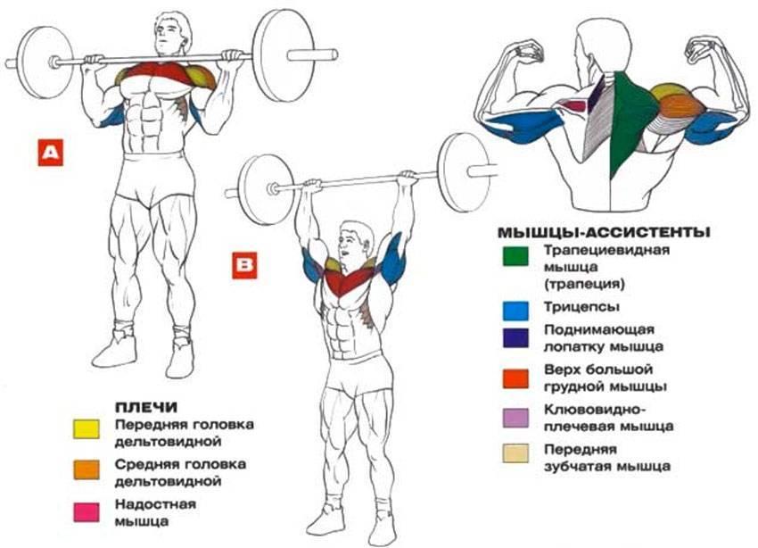 Армейский жим стоя — sportfito — сайт о спорте и здоровом образе жизни