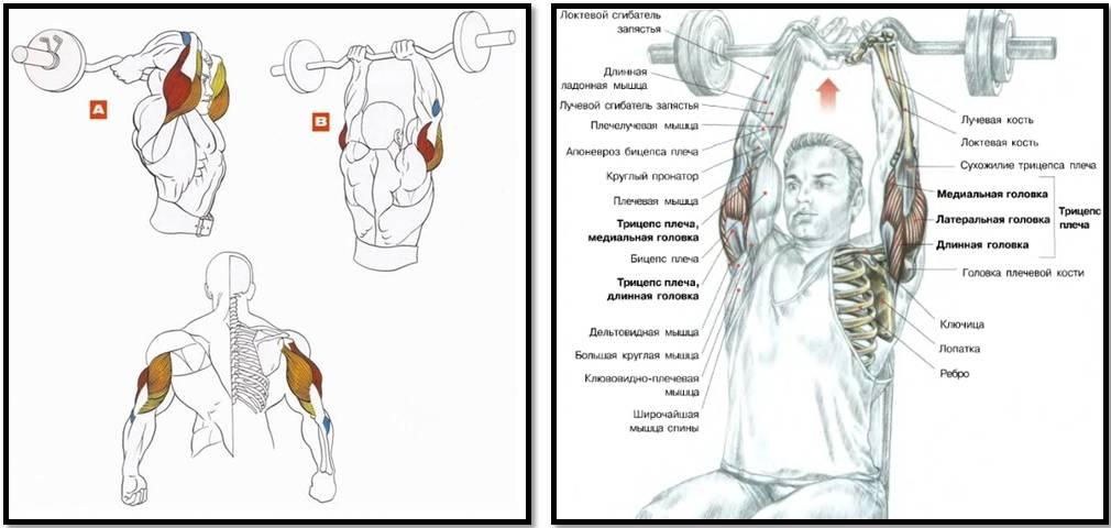 Верхние грудные мышцы: комплекс тренировок груди для мужчин и женщин