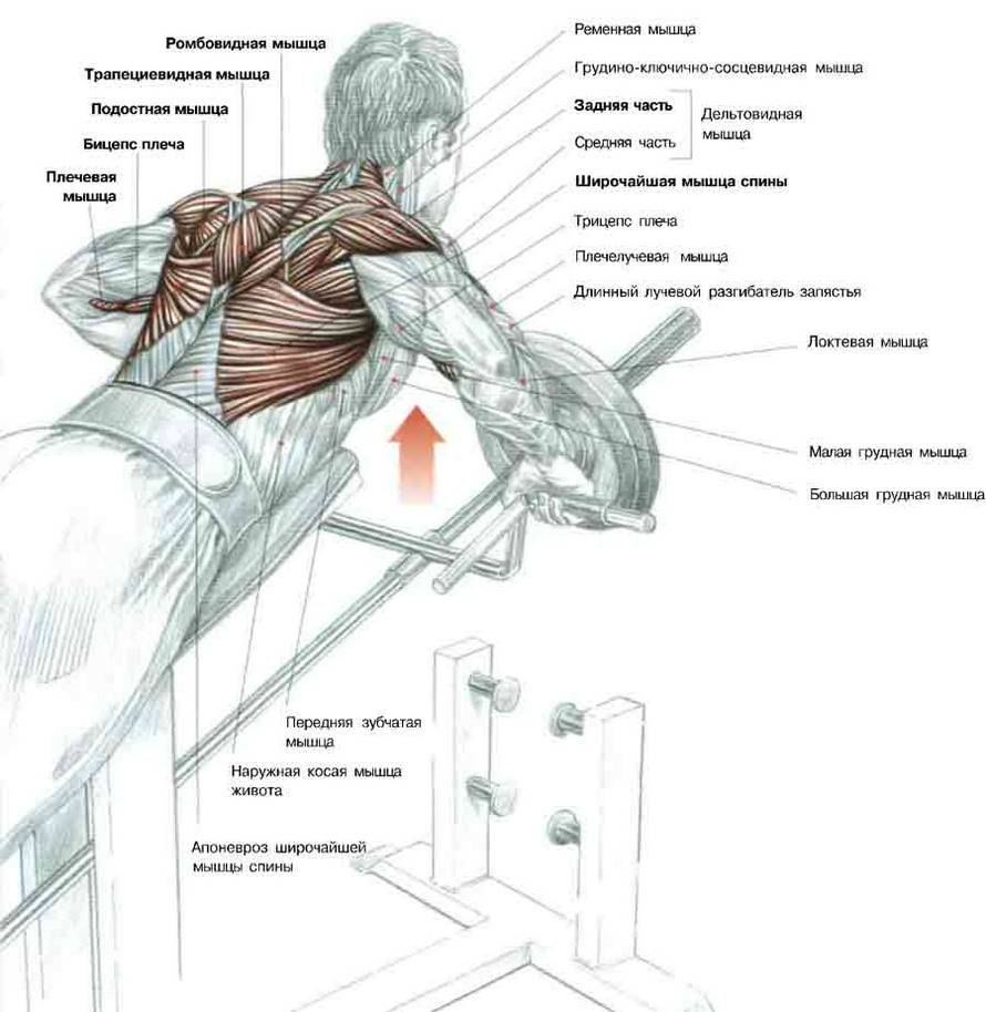 Широкие плечи у девушек: как избавиться и убрать большие дельты с помощью упражнений, что делать, если они шире бедер (фото)