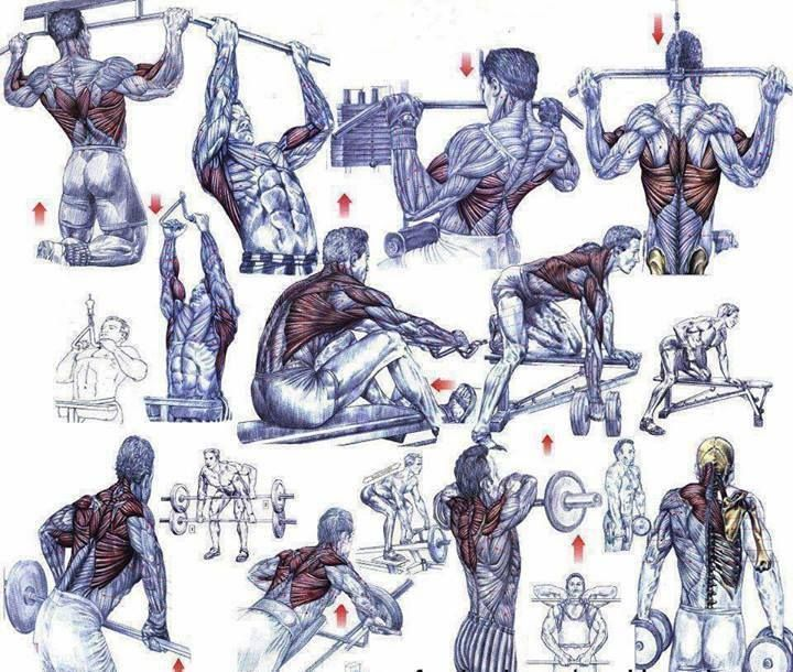 Бодибилдинг для начинающих: программа тренировок, режим питания