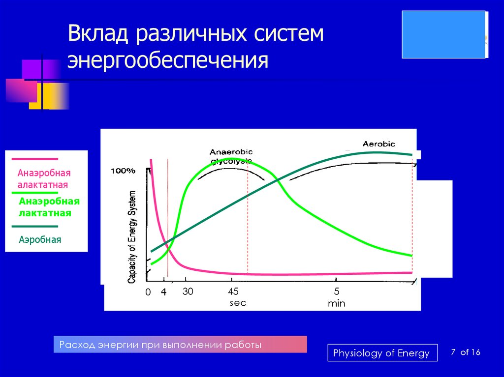 Глава 6. основы энергообеспечения мышечной деятельности в контактных стилях единоборств. с самого начала (путь тренера)