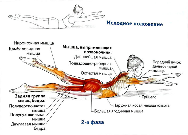 Лодочка упражнение для спины. польза от упражнения | здоровое питание