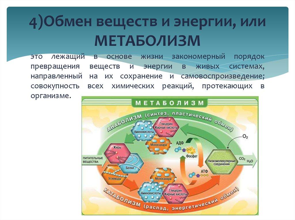Значение и роль обмена веществ в организме человека: как улучшить правильным питанием