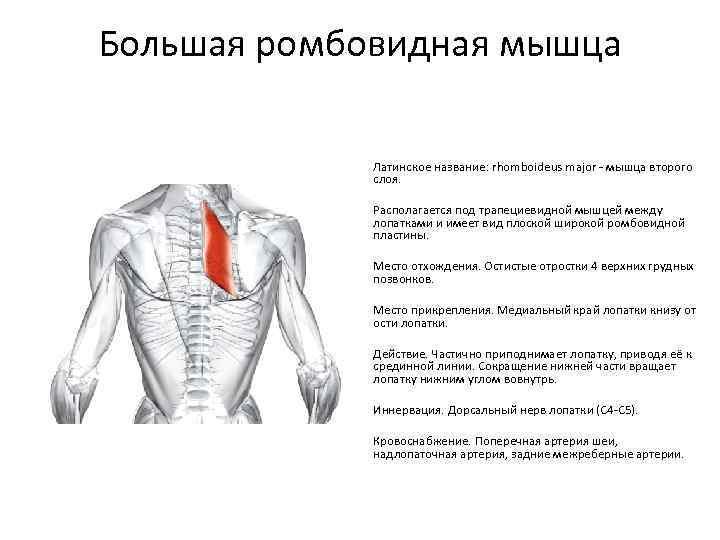 Простые упражнения для растяжки позвоночника в домашних условиях - для вашей здоровой спины