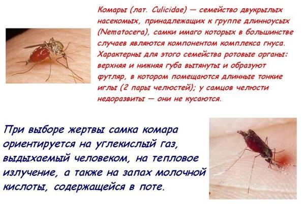 Какую группу крови любят комары: что делать, как спасаться от укусов, видео
