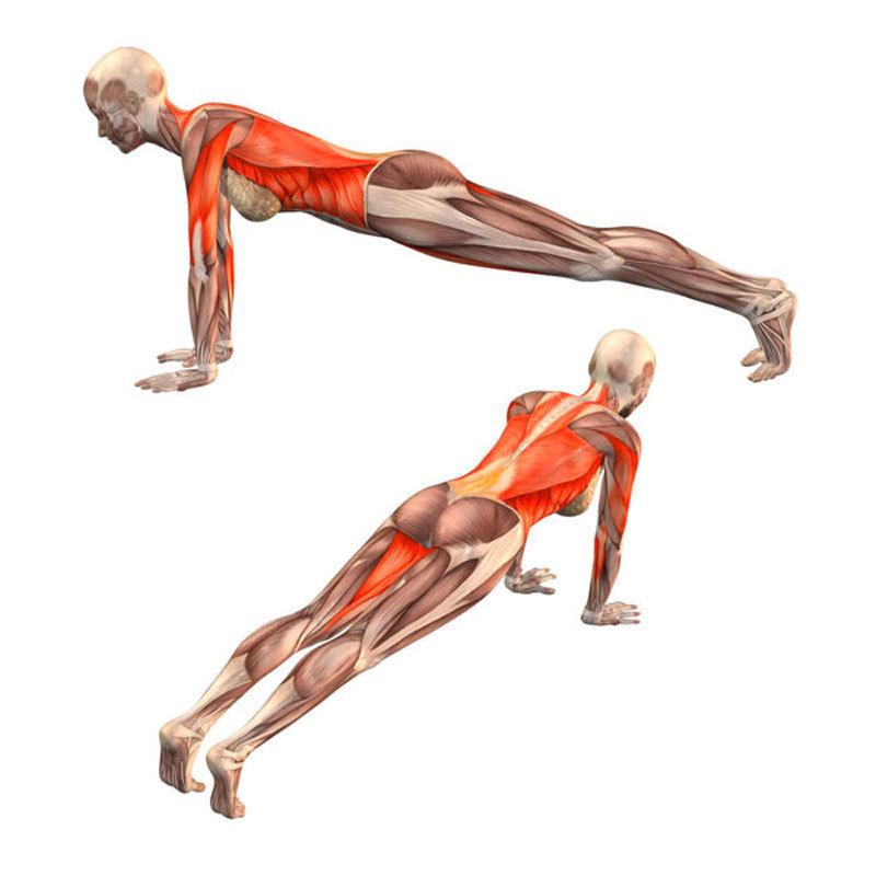 Планка на прямых руках: как правильно делать упражнение и какие мышцы работают?