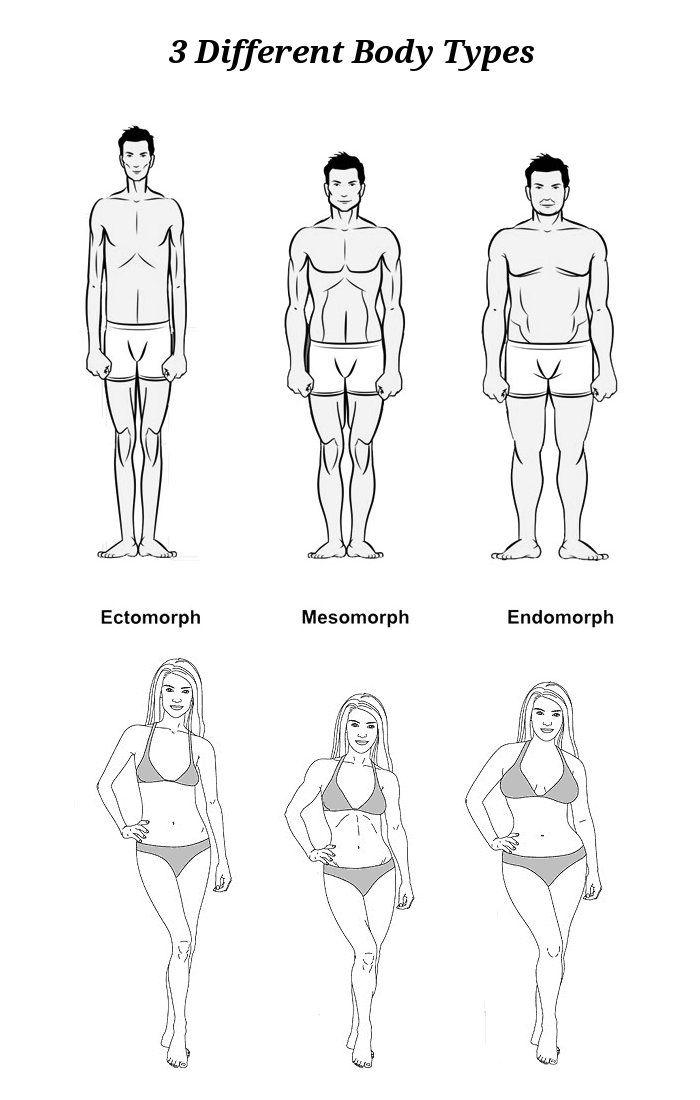 Типы телосложения человека: эктоморф, мезоморф, эндоморф