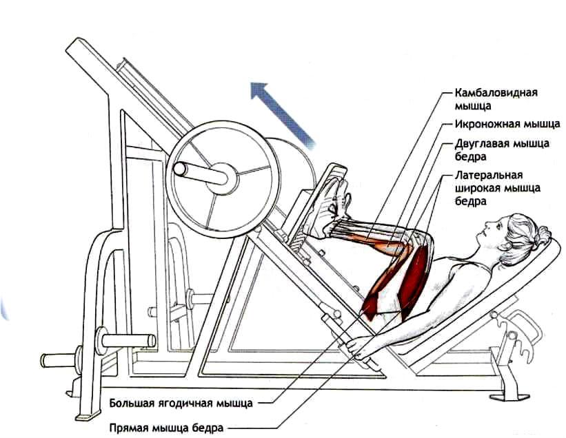 Жим ногами в тренажере для женщин
