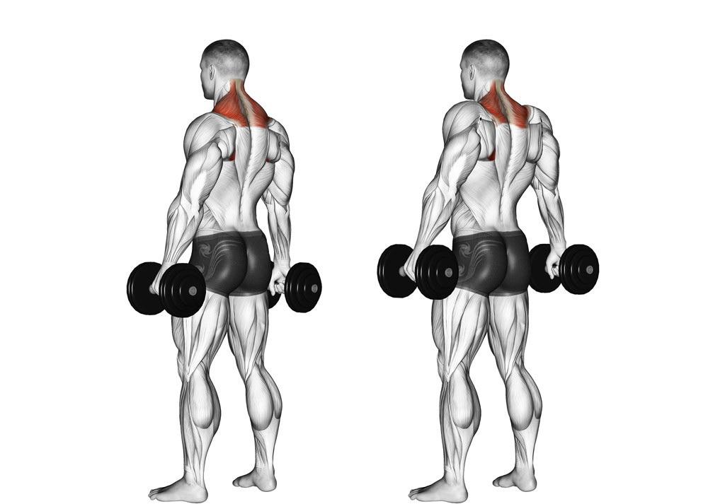 Упражнения на спину в домашних условиях с гантелями для мужчин. упражнения для мышц спины с гантелями | здоровое питание
