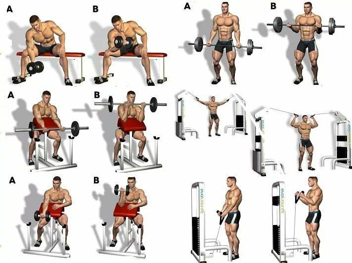 Упражнения на бицепс в тренажерном зале: 5 упражнений для тренировки бицепсов