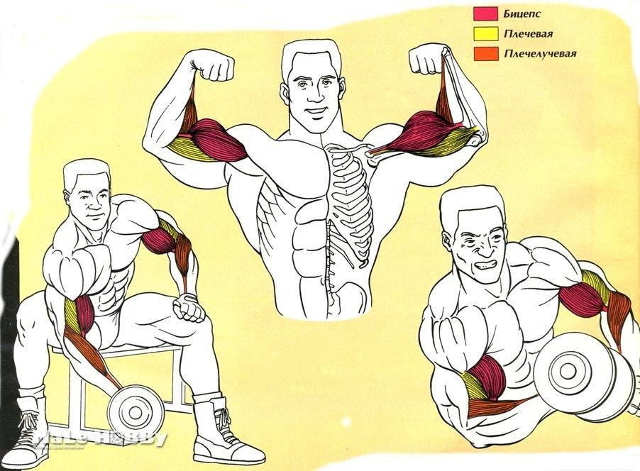 Топ 10 причин, почему не растут мышцы после тренировок