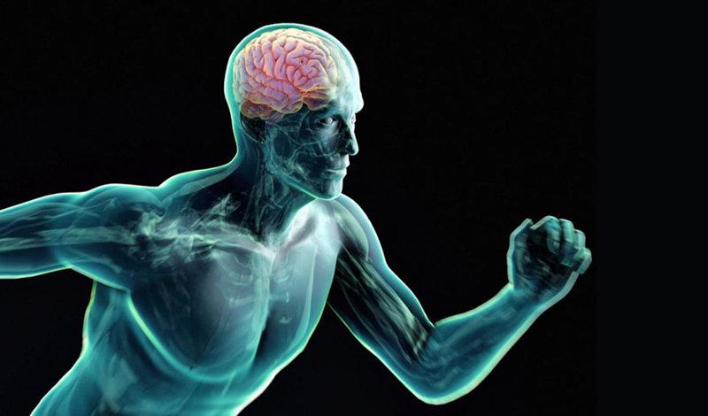 Интеллектуалы не толстеют. как работает мозг человека и на что он способен? | здоровье | аиф красноярск