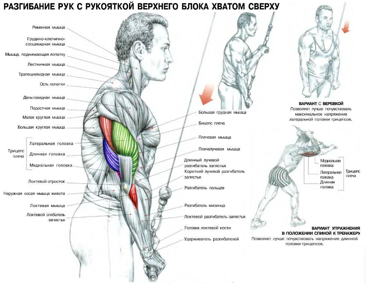Разгибание рук с верхнего блока стоя — прекрасный способ проработать трицепс плеча