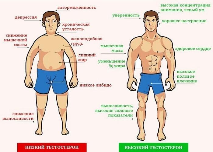 Грамотный выбор продуктов для регуляции уровня тестостерона