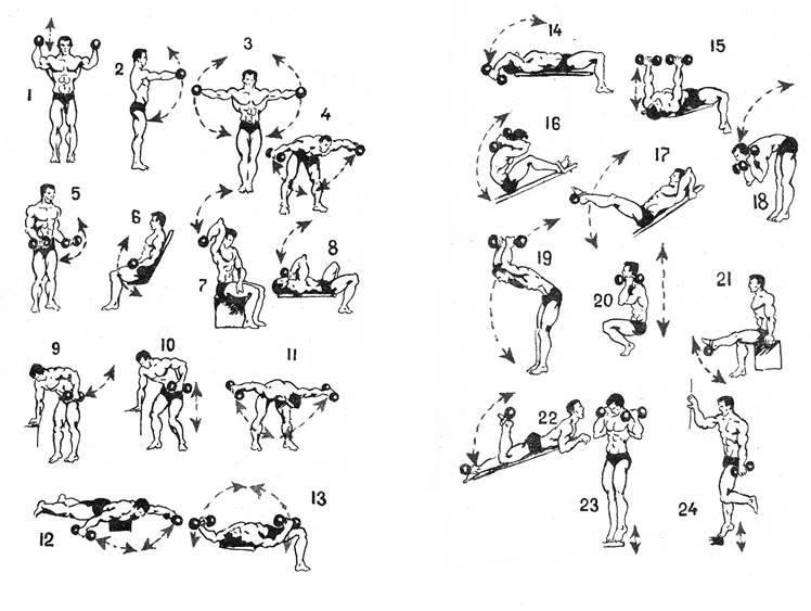 Атлетическая гимнастика: комплекс упражнений для новичков, особенности