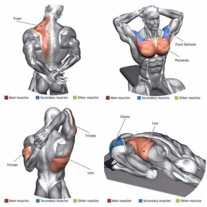 Как увеличить грудные мышцы в домашних условиях?