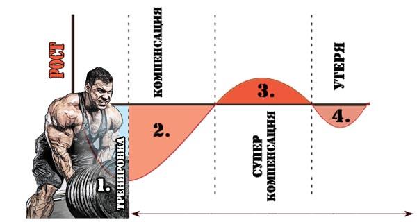 Прогрессия нагрузок в бодибилдинге. виды прогрессии