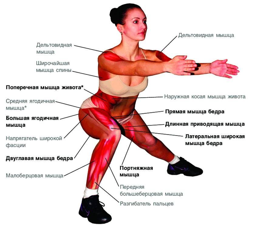 Как делать приседания на одной ноге? — sportfito — сайт о спорте и здоровом образе жизни