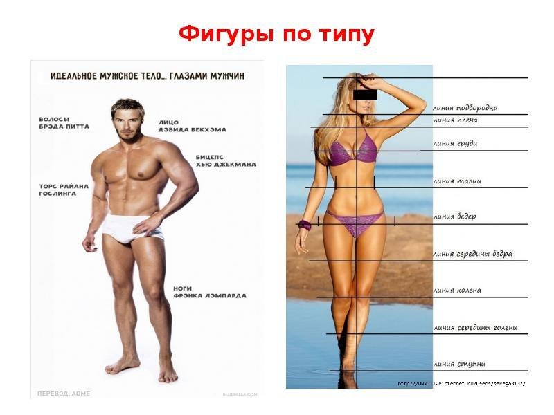 Определение женского типа фигуры