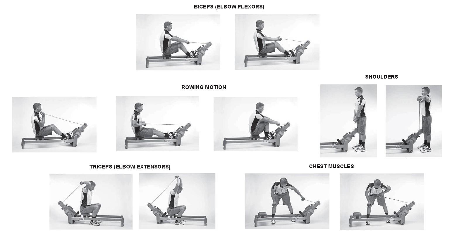 Гребной тренажер - какие мышцы работают (видео, цена, где купить)
