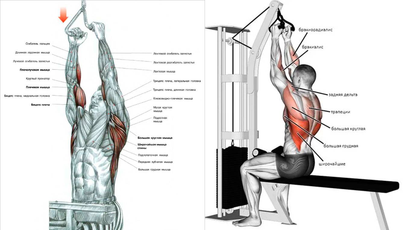 Тяга верхнего блока за голову и к груди — техника и правильная механика