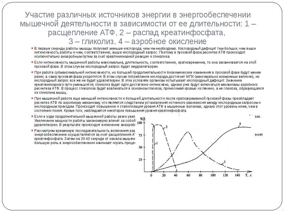 12.4. механизмы энергообеспечения мышечной ткани