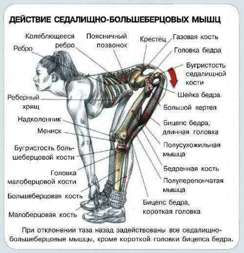Румынская тяга со штангой: особенности, отличия, техника выполнения