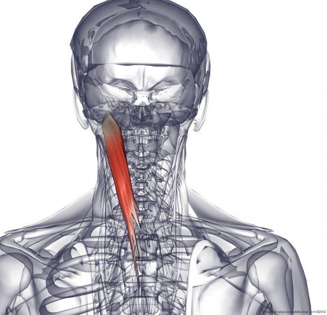 Шея и голова: причины боли и избавление от них