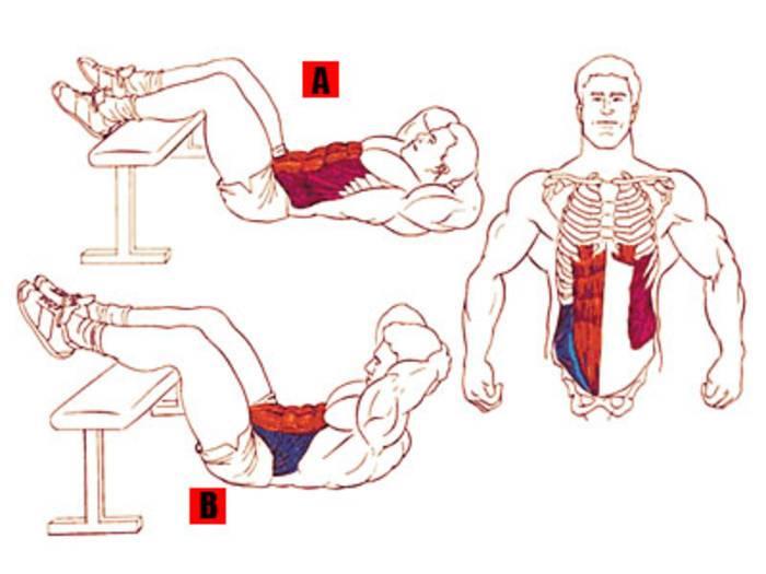 Как накачать косые мышцы живот в домашних условиях