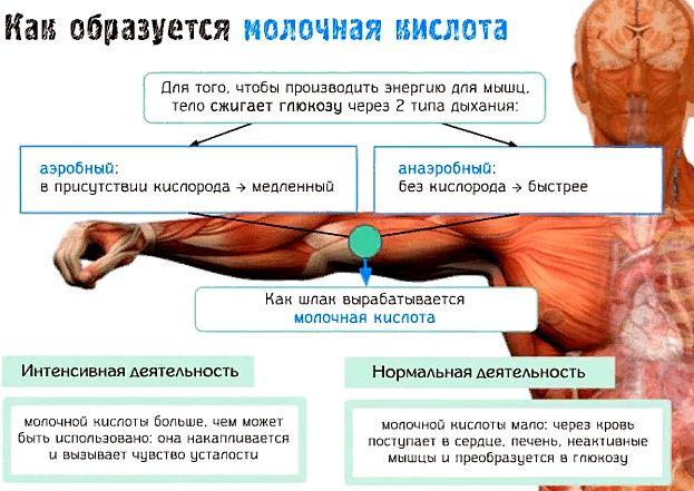 Молочная кислота в мышцах и как ее вывести | wmj.ru