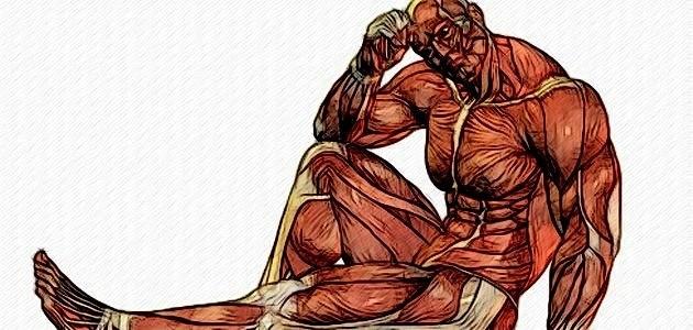 Быстрые и медленные мышечные волокна: что вам нужно о них знать :: как правильно ::  «живи!