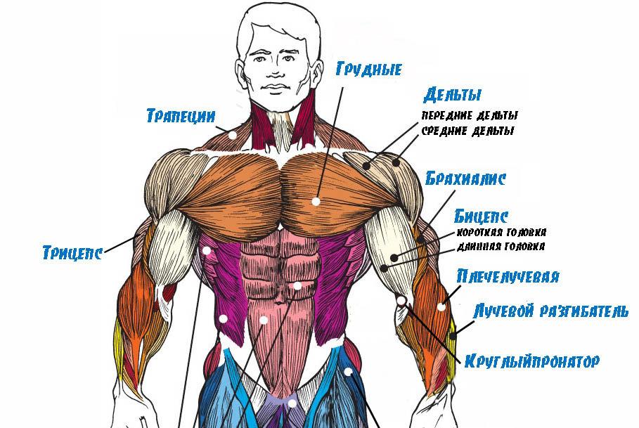 По каким причинам ваши мышцы не растут