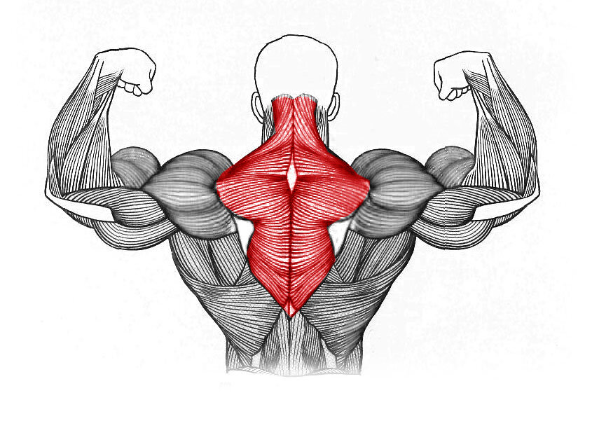Трапециевидная мышца упражнения в домашних условиях