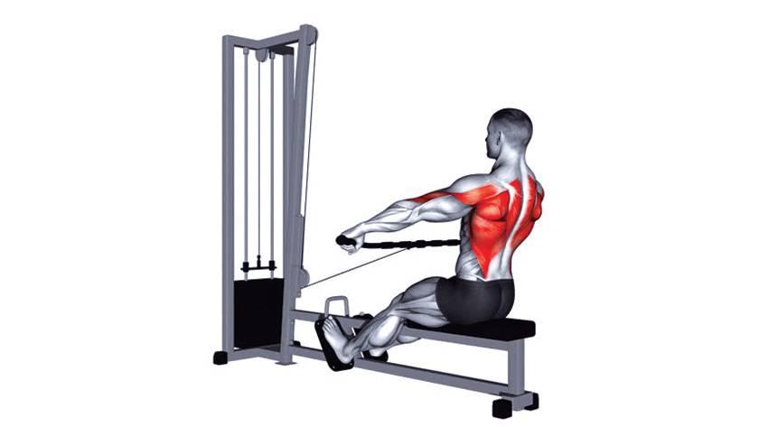 Тяга т-грифа: правильная техника, какие мышцы работают