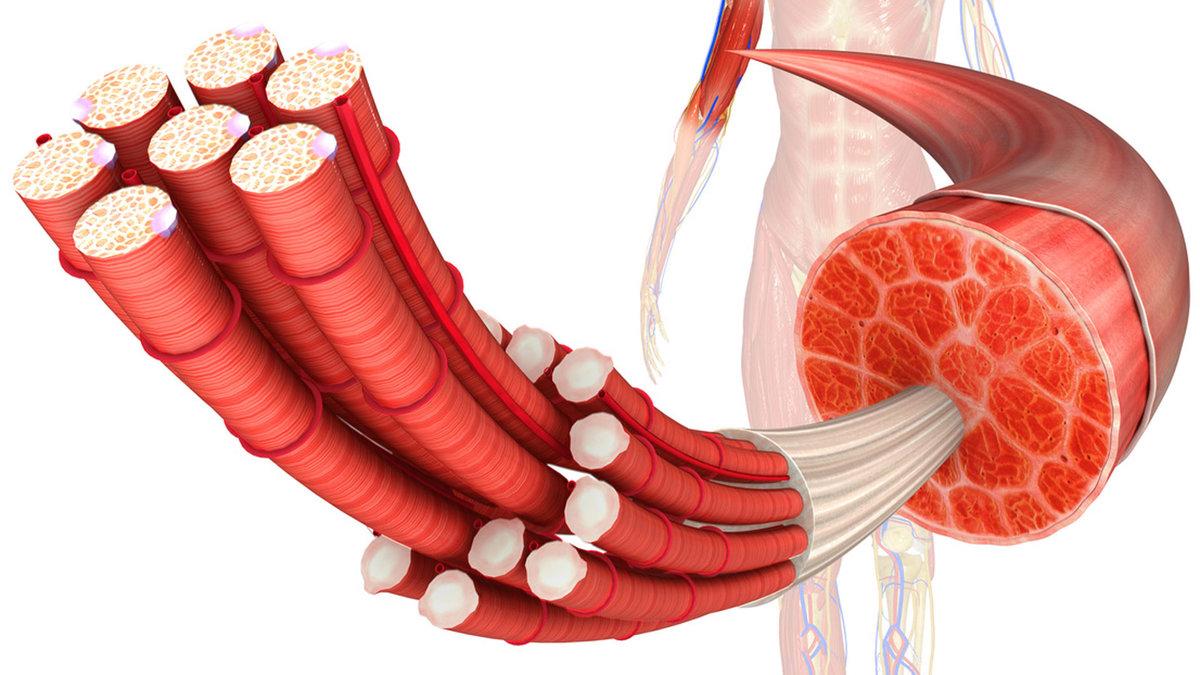 Молочная кислота в мышцах: как вывести