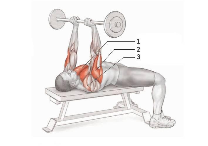Жим штанги лежа техника выполнения, как правильно делать узким хватом. жим лежа: какие мышцы работают