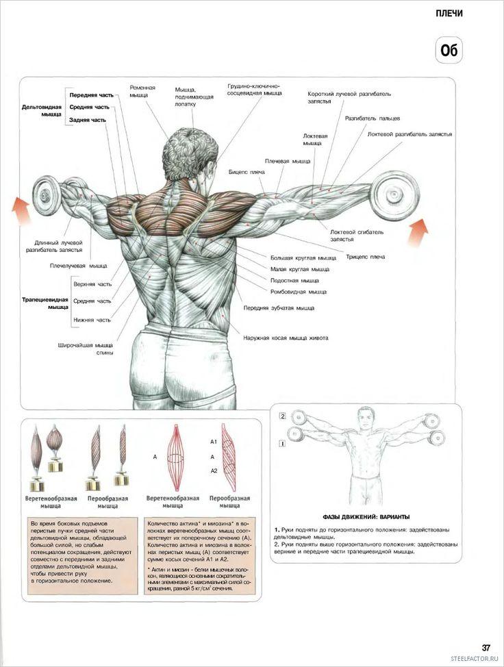 Упражнения на плечи для девушек в тренажерном зале: лучшие комплексы и программы, чтобы накачать красивые плечи для женщин