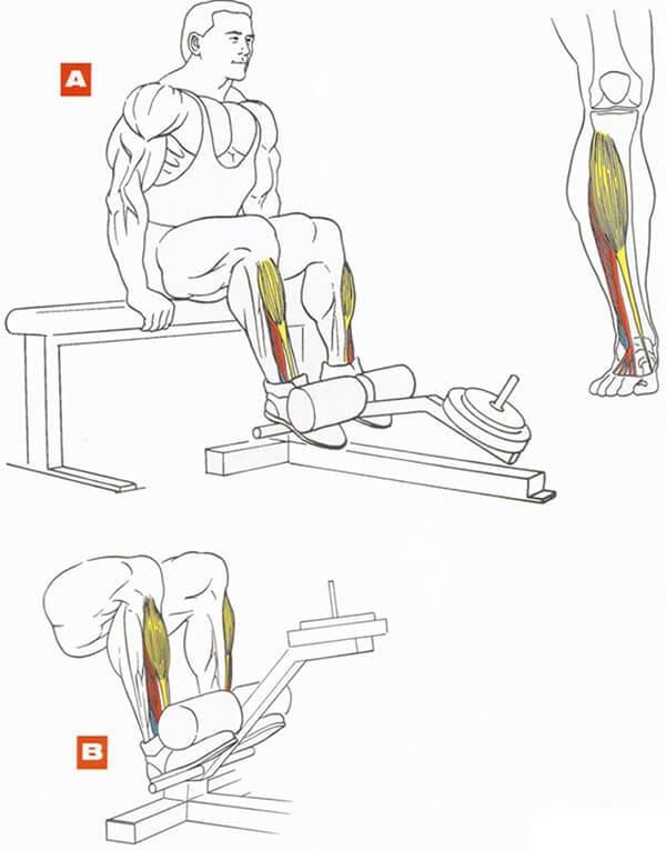Как правильно делать подъем ног лежа - 85 фото, тонкости и разновидности упражнения