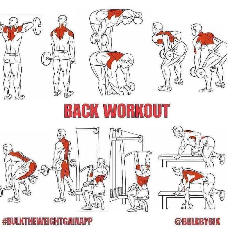 Программа тренировок на грудь, спину, бицепс, трицепс, плечи, ноги
