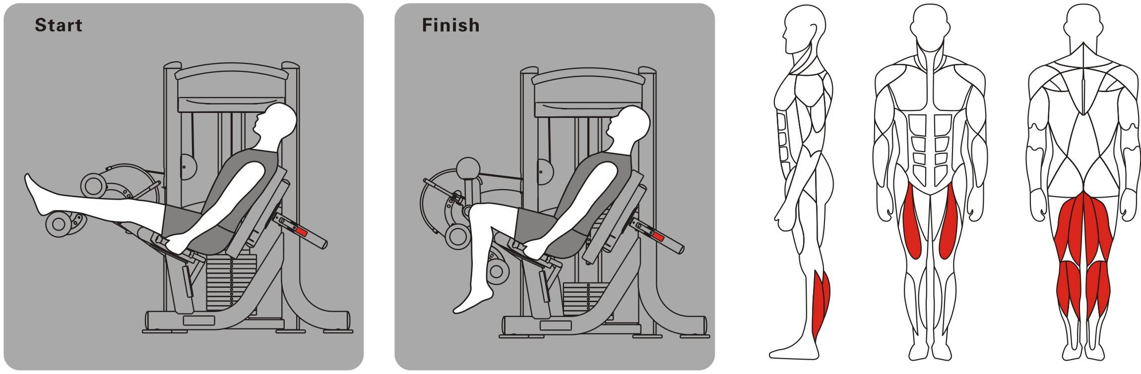 Cгибание ног в тренажере: техника выполнения лежа на животе, стоя и сидя