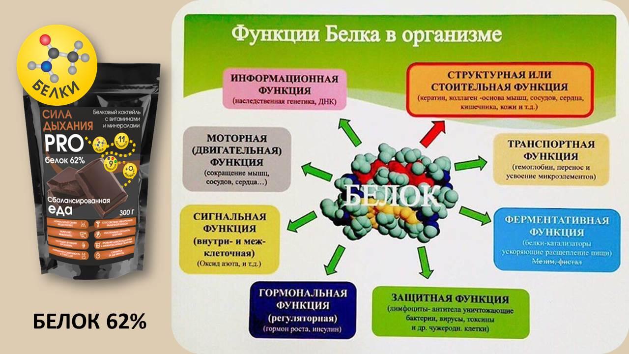 Белки: функции, синтез, строение, свойства, продукты богатые белком, виды, состав и норма в день