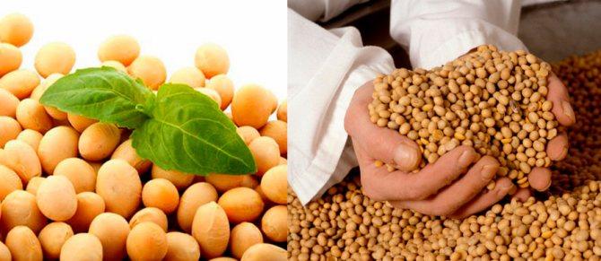 Соевые продукты - состав и пищевая ценность, калорийность и показания к употреблению, вред и отзывы