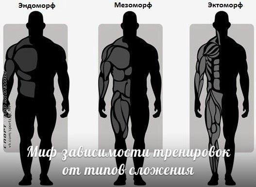 Программа тренировок для эндоморфа на похудение и прокачку мышц