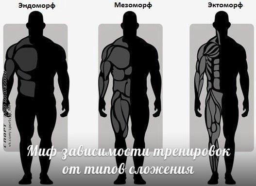Особенности питания мезоморфа