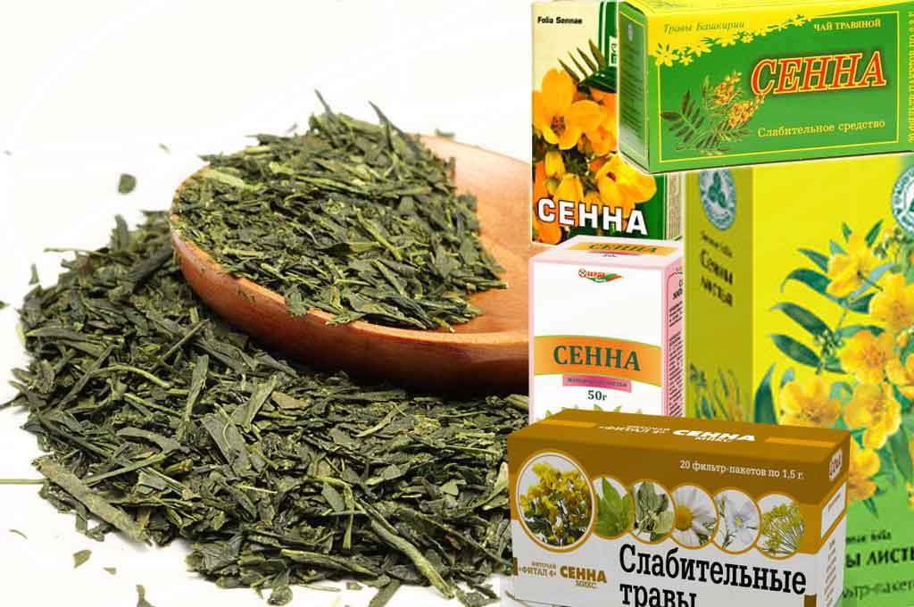 Сенна для похудения, рецепты, отзывы и результат похудения на листьях сенны