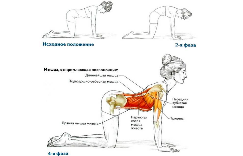 Топ-10 упражнений для здоровой спины