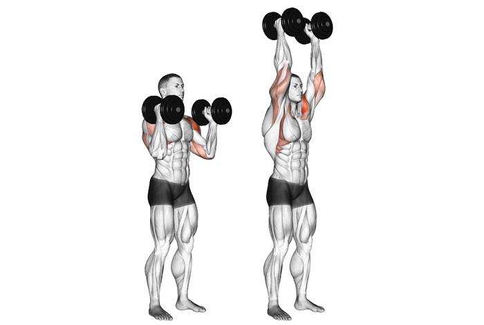 Жим гантелей стоя: техника выполнения. жим гантелей стоя вверх над головой: какие мышцы работают