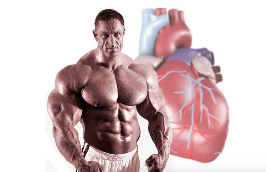 Рост мышц и разнообразие в тренировочной программе - dailyfit