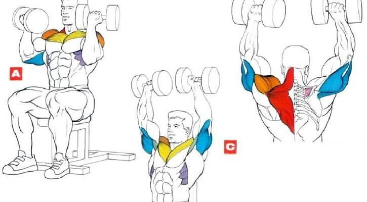 Упражнения на плечи с гантелями. топ лучших.