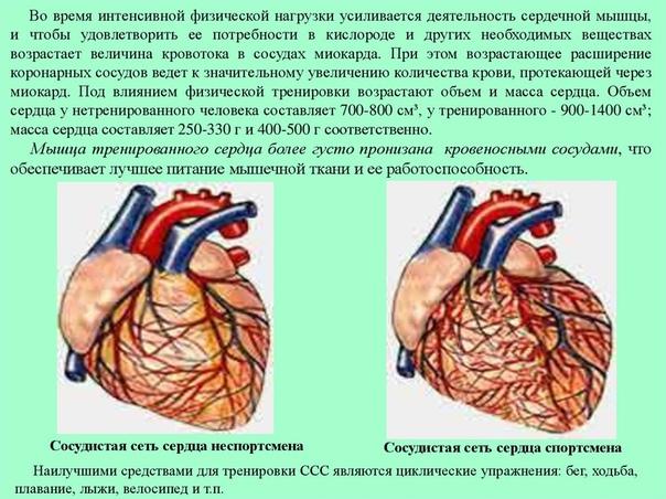Приседание исцеляют! 1 из главных упражнений, помогающих сердцу